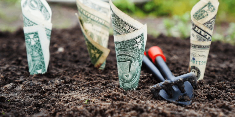 Money planted in dirt.