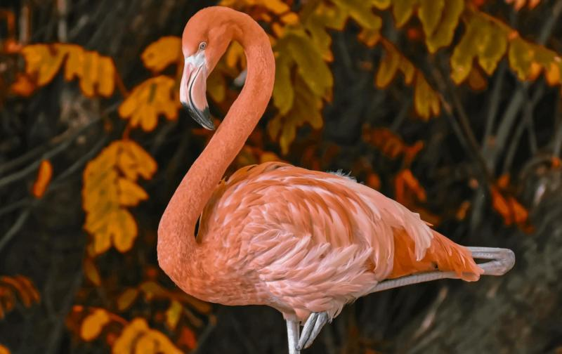 A flamingo against a backdrop of leaves.