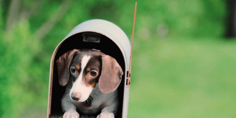 A puppy in a mailbox.