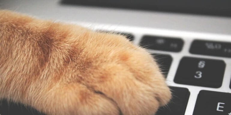 A cat's paw on a keyboard.