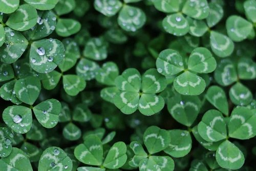 7 St. Patrick's Day Marketing Strategies to Boost Your Ecommerce Sales logo